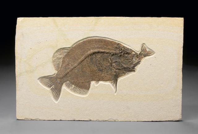 Rare Fish Eating a Fish