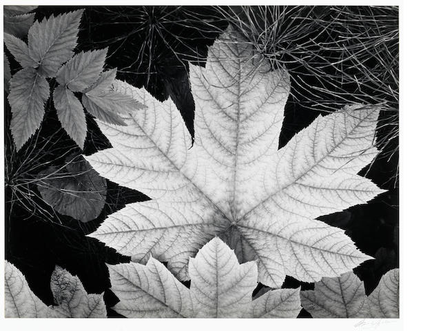 Ansel Adams (American, 1902-1984); Leaf, Glacier Bay National Monument, Alaska;