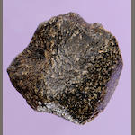 Complete Oriented Meteorite from Mars Discovered in the Sahara — NWA 4880