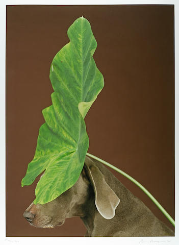 William Wegman (American, born 1943) Tall Hat, 2005 44 x 36in (111.8 x 91.4cm)