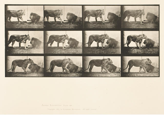 Eadweard Muybridge (British, 1830-1904); from Animal Locomotion, Pl. 727; 778; (2)