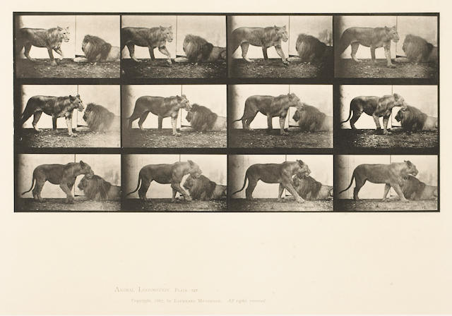 Eadweard Muybridge (British, 1830-1904); from Animal Locomotion, Pl. 727; 778; (2)