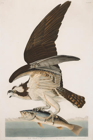 After John James Audubon (American, 1785-1851); Fish Hawk or Osprey, Falco Haliaetus. Male (Pl. LXXXI);