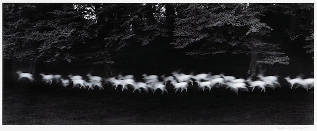 Paul Caponigro (American, born 1932); Running White Deer, Wicklow, Ireland;