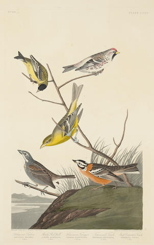 After John James Audubon (American, 1785-1851); Arkansaw Siskin. Mealy Red-poll. Louisiana Tananger. Townsend's Finch. Buff-breasted Finch (Pl. CCCC);