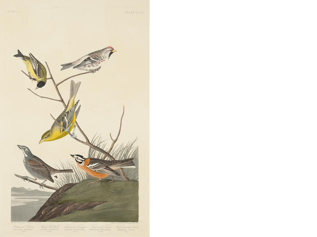 After John James Audubon (American, 1785-1851); Lazuli Finch. Clay-coloured Finch. Oregon Snow Finch (Pl. CCCXCVIII); Arkansaw Siskin; Mealy Red-poll. Louisiana Tananger. Townsend's Finch. Buff-breasted Finch (Pl. CCCC); (2)