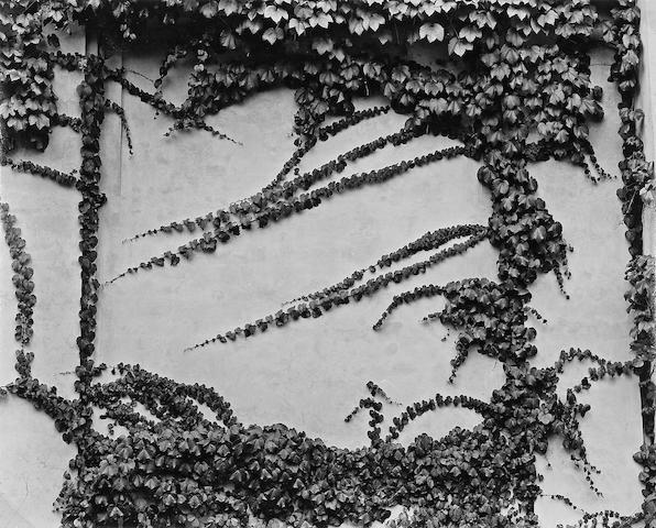 Brett Weston (American, 1911-1993); Vines, New York;