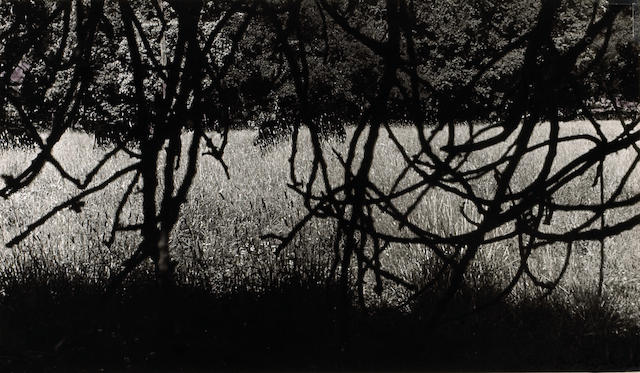 Ruth Bernhard (American, 1905-2006); Meadow Through Branches;