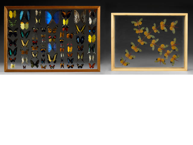 A Butterfly Collection and a Lanternfly Collection