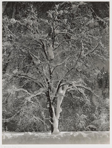 Ansel Adams (American, 1902-1984); Oak Tree and Cliffs of Cathedral Rocks, Yosemite;