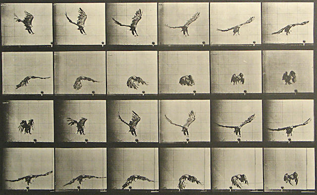 Eadweard Muybridge (British, 1830-1904); from Animal Locomotion, Pl. 771;