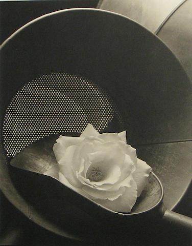 Kenro Izu (Japanese/American, born 1949); Still Life #56;