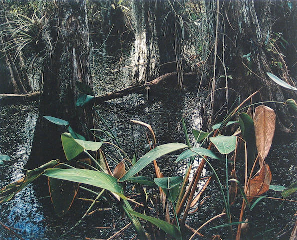 Eliot Porter (American, 1901-1990); Cypress Swamp, from Portfolio I, The Seasons;
