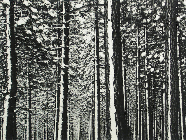 Lloyd Ullberg (American, 1904-1996); California Bristlecone Pine Trees;