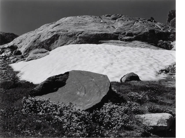 Edward Weston (American, 1886-1958); Bryanthus, High Sierras;