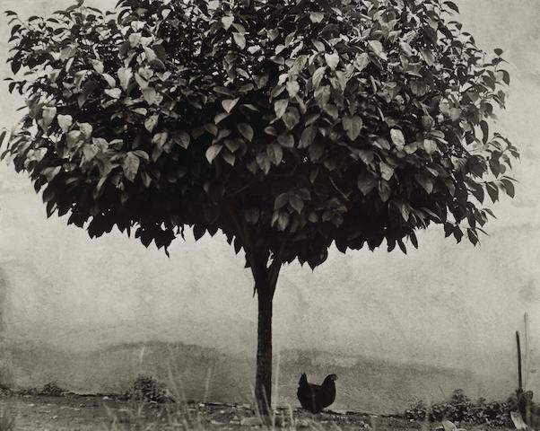 Edouard Boubat (French, 1923-1999); La poule et l'arbre, France;