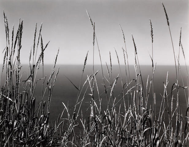 Edward Weston (American, 1886-1958); Grass Against Sea, Big Sur;