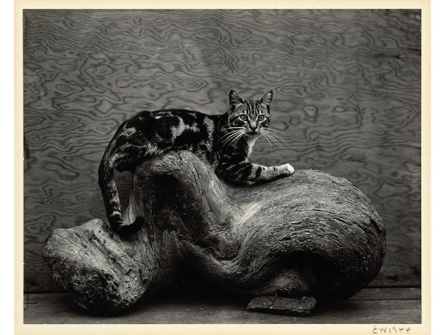 Edward Weston (American, 1886-1958); Johnny;