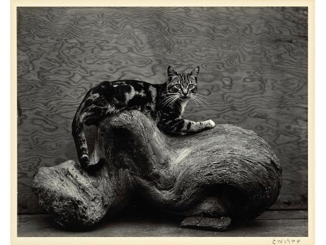 Edward Weston (American, 1886-1958); Johnny;
