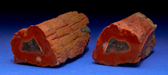 Rare Yellow Cat Red Wood Petrified Wood Branch