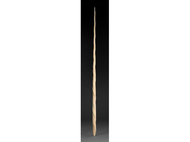 Extremely Large Narwhal Tusk