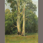 Attributed to Charles F. Mudie (Australian), 20th century Summertime Trees 18 x 14in