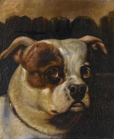 Circle of Samuel Raven (British, 1775-1847) Head study of a white Bulldog; Head study of a brown and