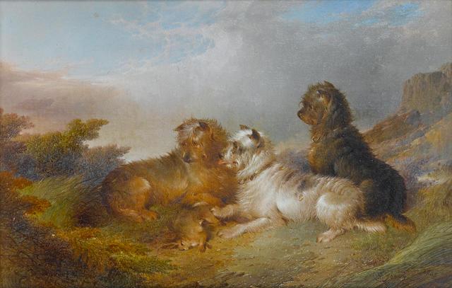 Paul Jones (British, active 1856-1879) Terriers with game 12 1/8 x 8 in. (30.8 x 20.3 cm.)
