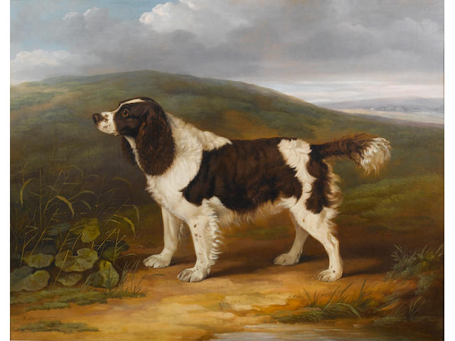 James Barenger (British, 1780-1831) A liver and white English Springer Spaniel in a landscape: purpo