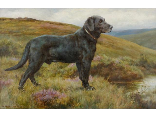 Herbert Thomas Dicksee, R.E. (British, 1862-1942) Old Bridge Bob; a black Labrador Retriever 14 1/2 x 22 1/2 in. (37.3 x 57.1)