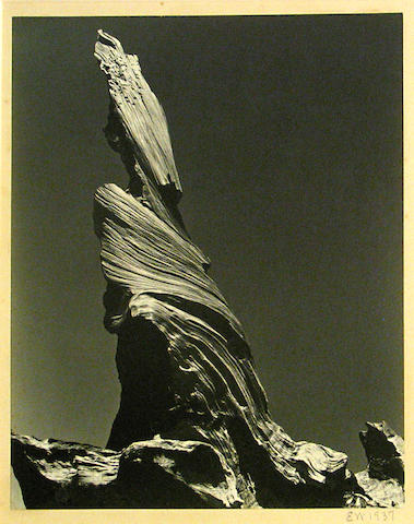 Edward Weston (American, 1886-1958); Drift Stump, Crescent Beach;