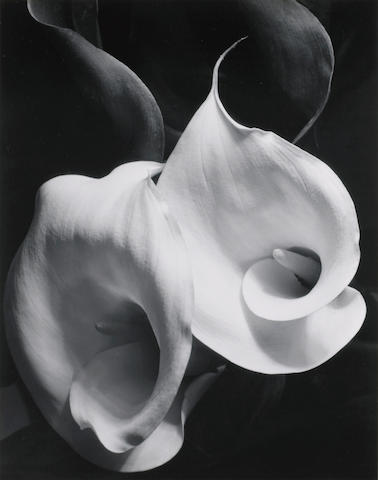 Imogen Cunningham (American, 1883-1976); Two Callas;