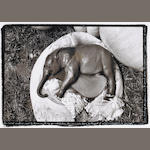 Peter Beard (American, born 1938); Elephant Embryo, Uganda, from The End of the Game, Last Word from