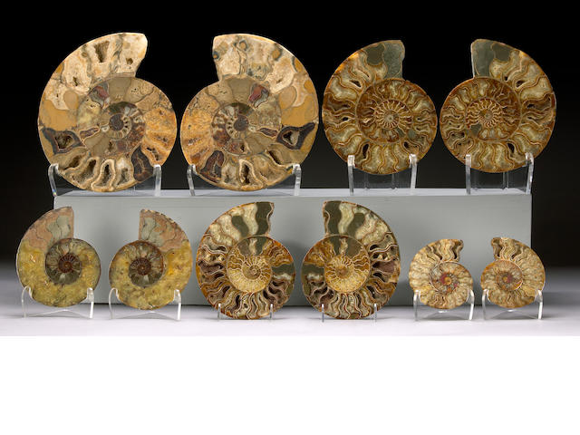 Group of Five Ammonite Pairs