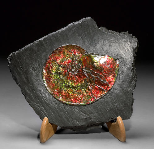 Opalescent Ammonite on Matrix