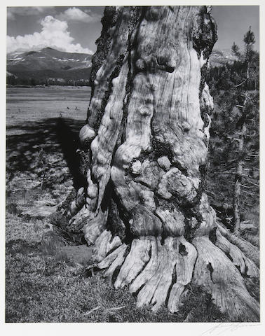 Ansel Adams (American, 1902-1984); Tuolumne Meadows, Pl. 14, from Portfolio IV;