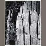 Ansel Adams (American, 1902-1984); Moth and Stump, Interglacial Forest, Pl. 6, from Portfolio Two;