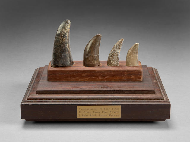 Set of T. rex Teeth