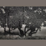 Ruth Bernhard Apple Tree 1970 gelatin silver print Provenance: Gift from the artist