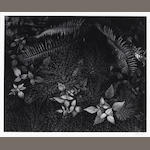 Ansel Adams (American, 1902-1984); Leaves, Mills College, California;