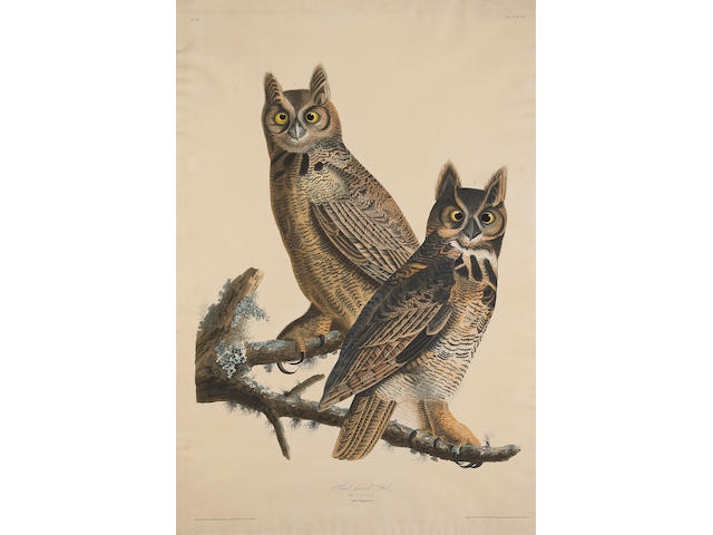 John James Audubon (American, 1785-1851); Great Horned-Owl. Strix Virginiana. (Pl. 61);