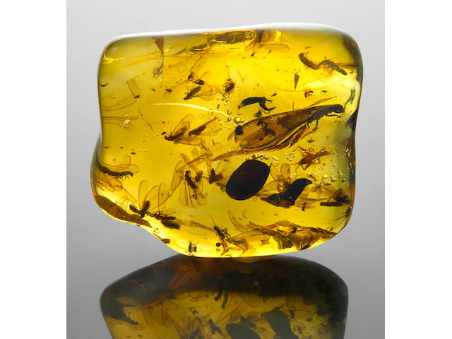 Large Amber Specimen with Insects including a Cricket