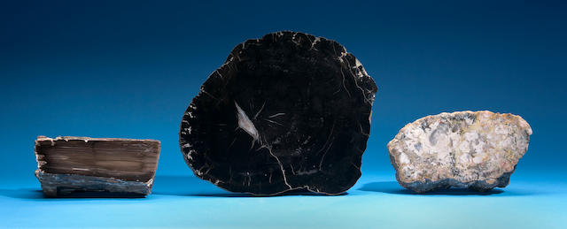 Agatized Dinosaur Dung and Petrified Wood