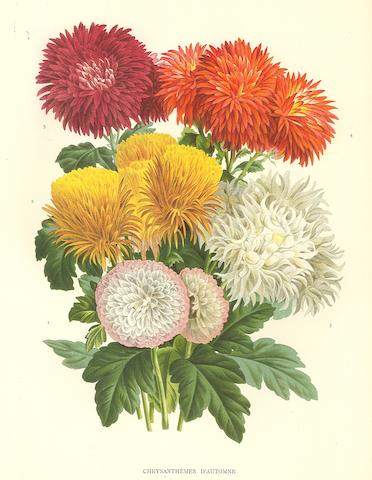 [ILLUSTRATION HORTICOLE.]