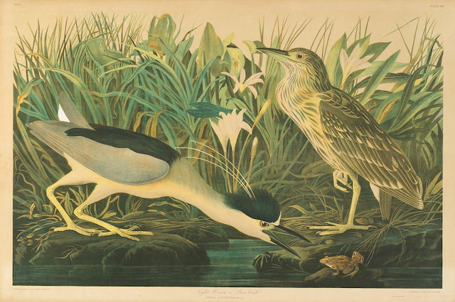 John James Audubon (after)<br> Night Heron, plate 363 26 1/2in X 40in (67cm X 101cm)
