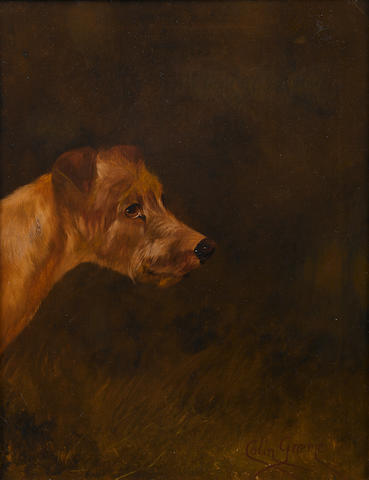 Colin Graeme (British, 1858-1910) Irish Terrier 18 x 14 in. (45.7 x 35.5 cm.)