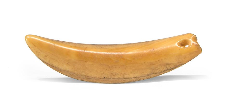 An important Hawaiian whale tooth neck pendant, lei 'opu'u length 4 1/8in