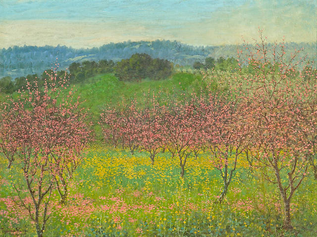 Theodore Wores (1859-1939) Peach blossoms, Saratoga, California, 1921 36 x 48 1/4in