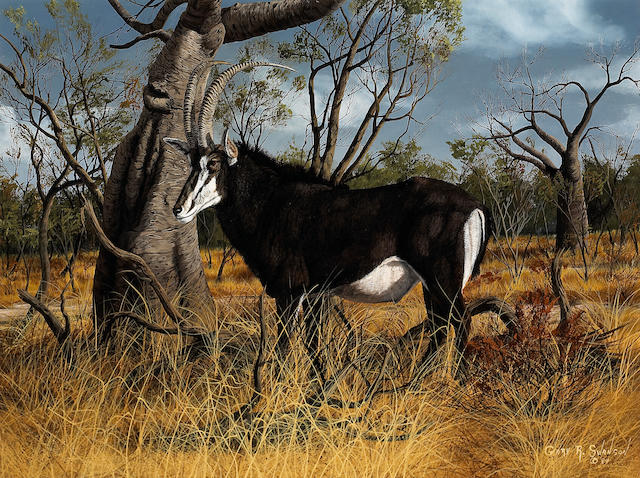 Gary R. Swanson (American, born 1941) Sable antelope, 1984 24 x 32in overall: 35 1/4 x 43 1/4in