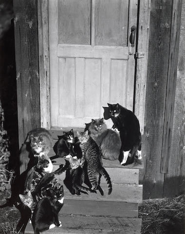 Edward Weston (American, 1886-1958); Family Group on Wildcat Hill; (2)